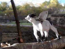 vache ailée © stef Shnou