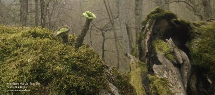 anémones vertes sur mousse en panoramique